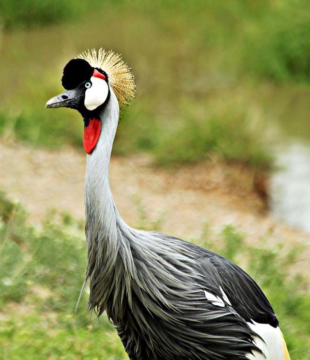 zdral-zdrala-slike-ptice-slike-ptica-pticama-fotografije-divlje-zivotinje03_1450994337.jpg