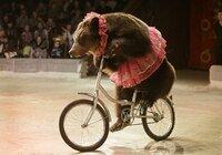 medved na biciklu.jpg