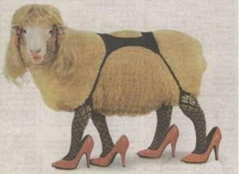 sexy_sheep-1.jpg