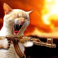 crazy-cat-1.jpg